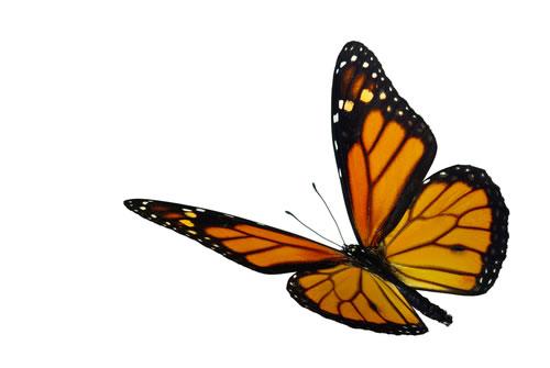 Beautiful butterfly flying!